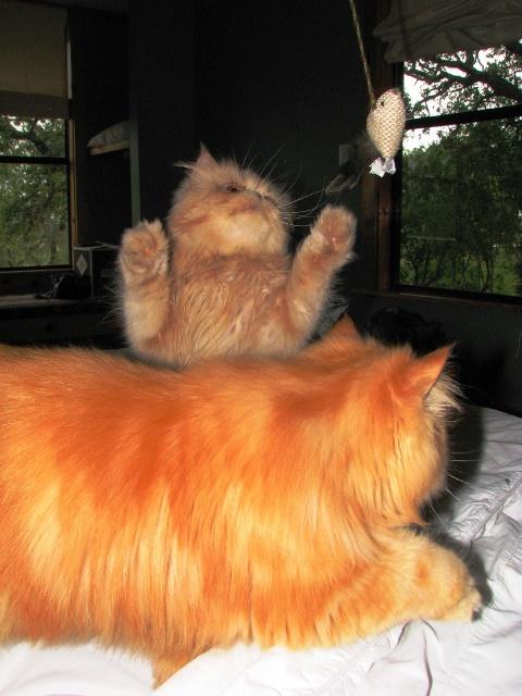 PaulaReyne.com Kitties with toy 480x640
