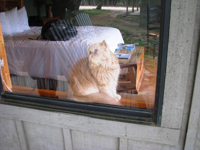 PaulaReyne.com Latte looks out the window 640x480