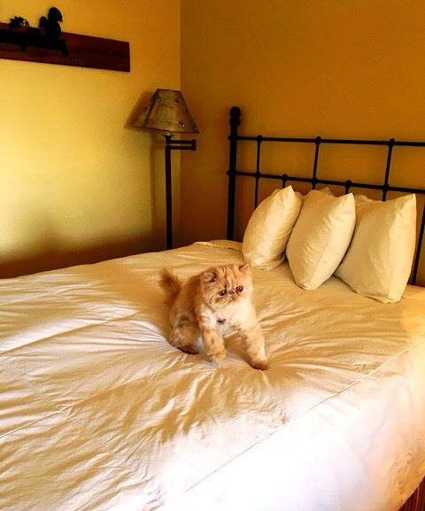 PaulaReyne.com Judah Had To Hurl story pic 39-480x577